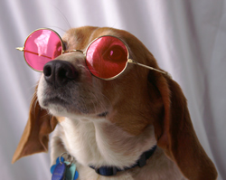 Whip off those rose-colored glasses and see your business situation for what it is.