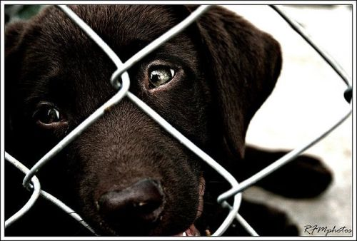 Help shelters find homes for black dogs. A promo idea from TGtbT.com